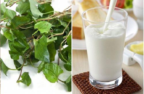 Cách làm mặt nạ trị mụn bằng rau diếp cá và sữa tươi