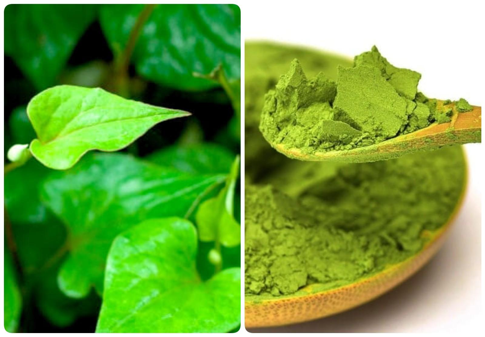 Cách làm mặt nạ trị mụn bằng rau diếp cá và trà xanh